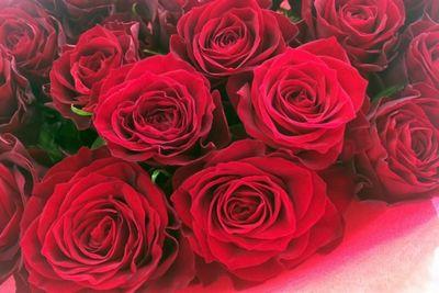 バラ色のバラ