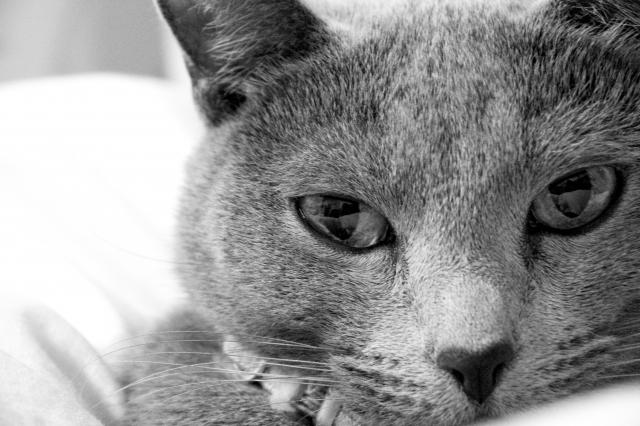 倉田みずきのイメージは猫の目