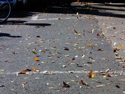 木枯らしで枯れ葉が舞う様子